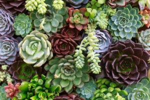 Plantas jardin decoracion