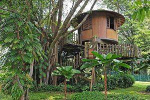 Casa construidas sobre árboles