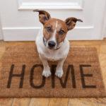 ¿Tienes mascota y no sabes cómo adaptar tu decoración a ella? ¡Toma nota!