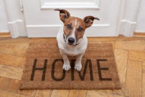 Perro bienvenida casa