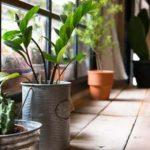 Empieza bien el año: Haz tu casa ecofriendly