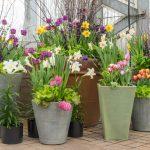 Plantas con flores todo el año, ¿es eso posible?