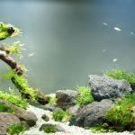 Ecosfera casera: cómo hacer una