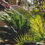 Cómo sacar partido a un jardín pequeño