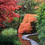 ¿Qué es un jardín japonés?