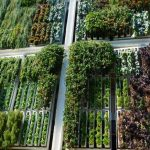 ¡Quiero un jardín vertical!