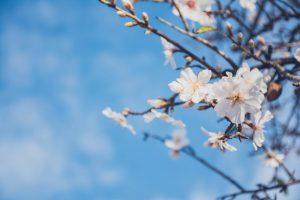 ideas para decora en primavera